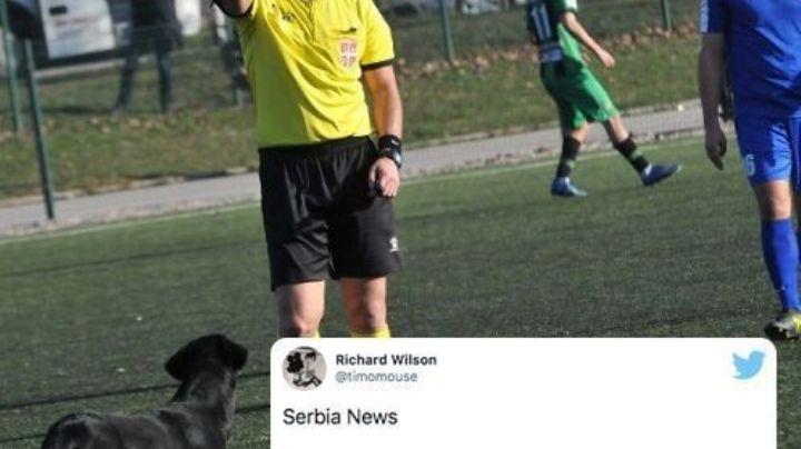 ¡Guau! Perro es expulsado por árbitro tras invadir un campo de futbol en Serbia