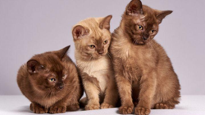¿Tienes un gato? Descubre cuáles son las enfermedades más comunes entre ellos