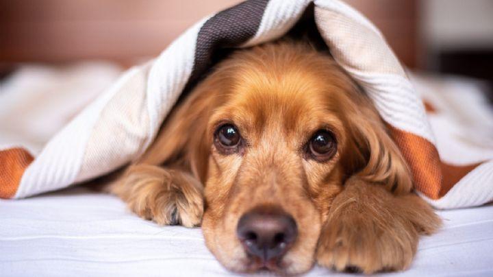 ¡Evita dárselos! Los medicamentos para humanos provocarían la muerte de tu perro
