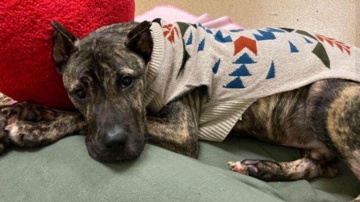 Moribundo y abandonado: Conoce la impactante historia del perro que se aferra a la vida