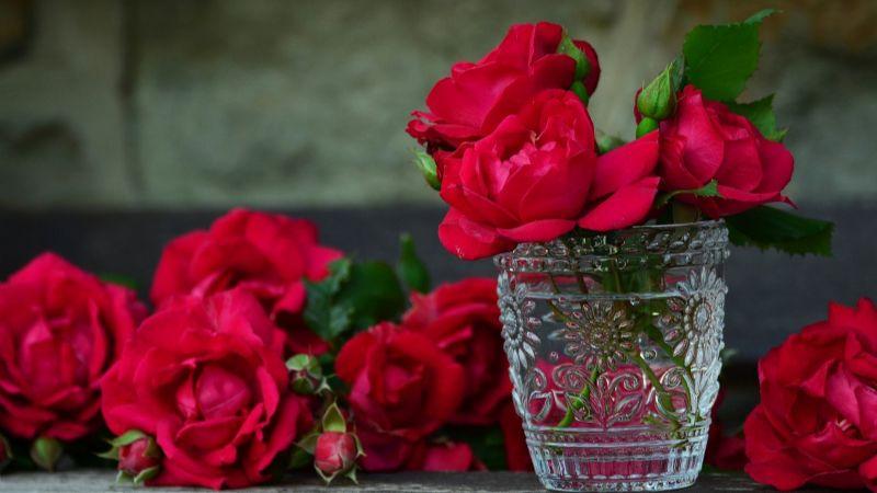Regala las rosas correctas este San Valentín; este es el significado de su color