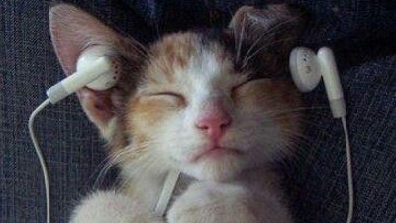 ¡Magnífico! Esto es lo que la música puede hacer por la salud de tu gato