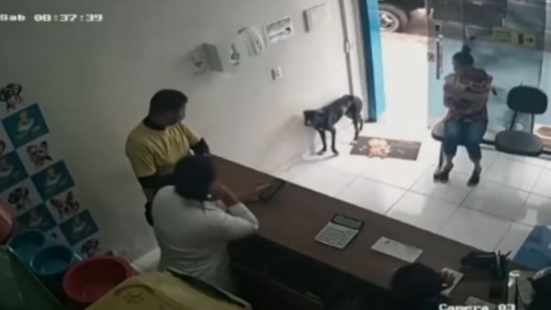 VIDEO: Perrito herido llega a una veterinaria y muestra su patita para que lo ayuden