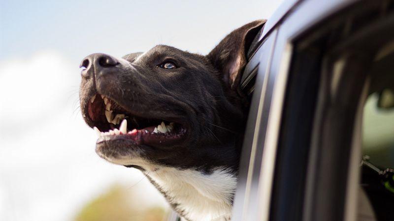¿Adoptaste a un perro de raza grande? Estos nombres podrían ser perfectos para él