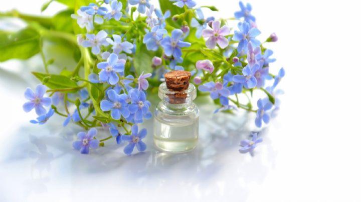 Terapia de flores: Descubre qué es y cuáles son sus grandiosos beneficios