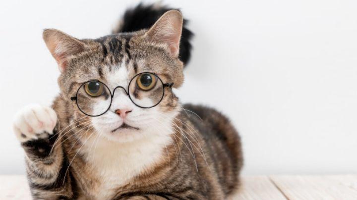 ¿Tu gato está enfermo? Esta guía te ayudará a darle todos sus medicamentos