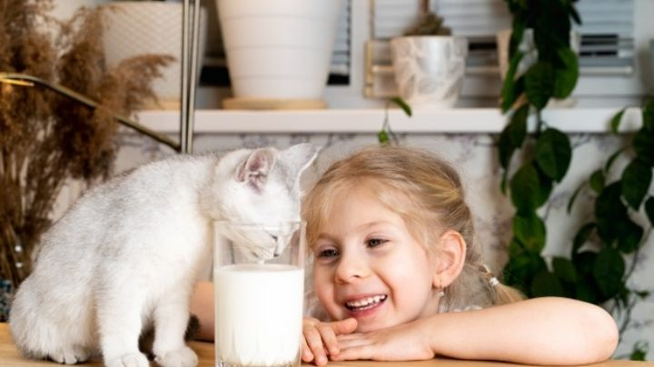Cuida de tu gato al conocer que tipo de alimentos no puede comer