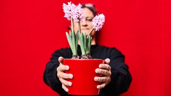 Logra que tu hogar tenga el mejor olor con ayuda de las flores más aromáticas
