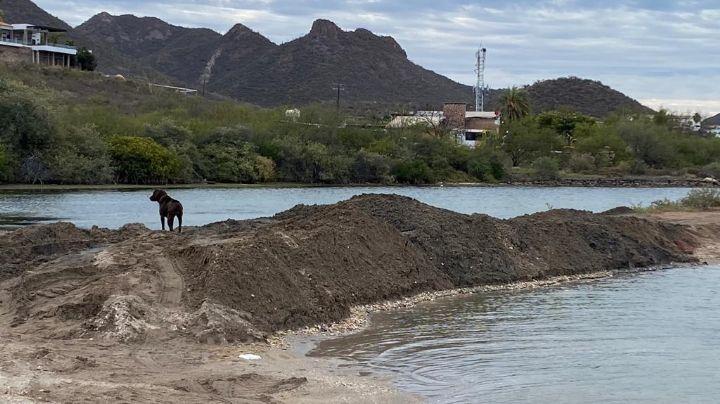 Vecinos denuncian Ecocidio en playas de Miramar en Guaymas