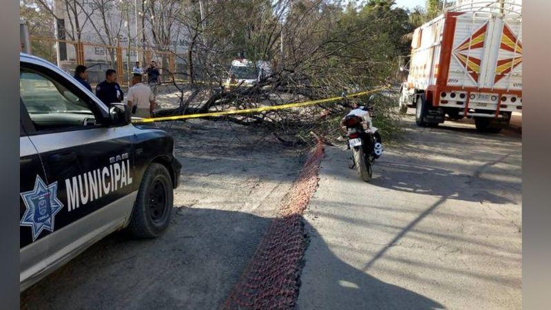 Lamentable: Niño muere al ser aplastado por un árbol mientras paseaba junto a su padre