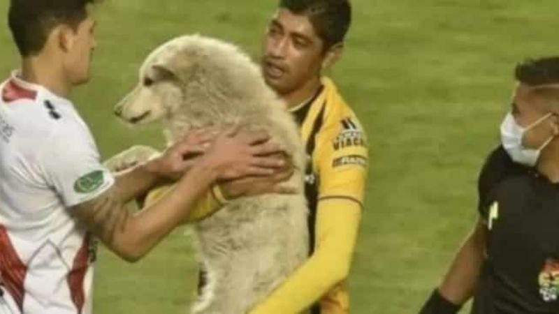 ¡Precioso gesto! Luego de robarle sus tenis, futbolista perdona a un perrito y lo adopta