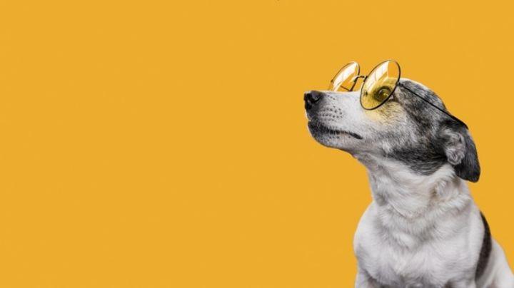 Demuestra tu creatividad con estos nombres para perros inspirados en series de televisión