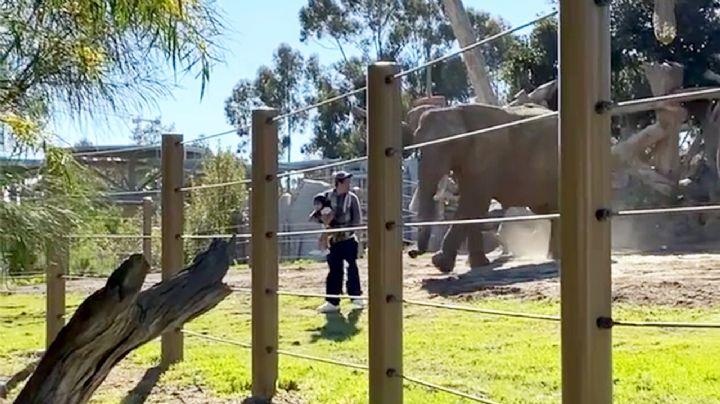 VIDEO: ¡Qué irresponsable! Padre carga a su bebé y entra con elefantes; casi los golpean