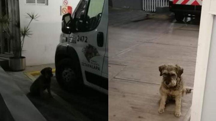 VIDEO: ¡Amistad verdadera! 'Perrito' no abandona a su amigo y lo acompaña en la ambulancia