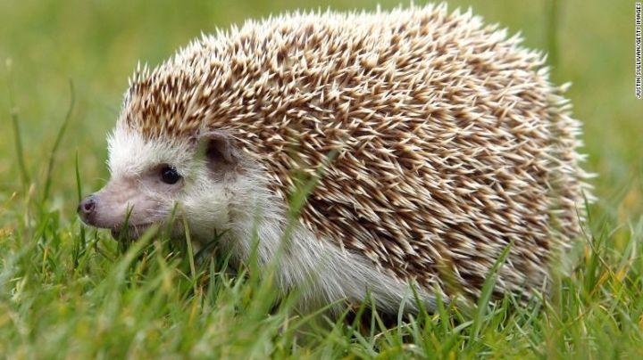 ¡Insólito! Zoológico de Japón reemplaza a erizo con esto; FOTO se hace viral