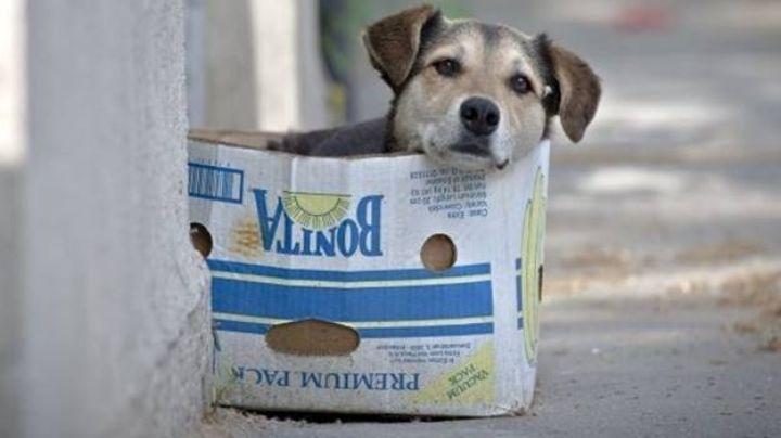 ¡Triste noticia! Animales de compañía se quedan 'huérfanos'; el Covid-19 les quitó a sus dueños