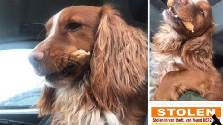Fuerte operativo: Rescatan a 83 canes 'secuestrados' por una pandilla de 'robaperros'