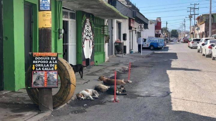 Maltrato animal sin seguimiento, denuncias quedan impunes en Empalme y Guaymas