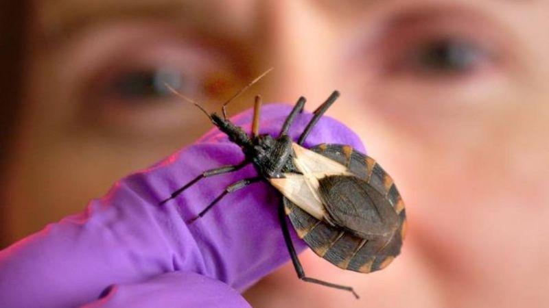 Enfermedad silenciosa transmitida por insectos podría afectar al menos a 7 millones de personas