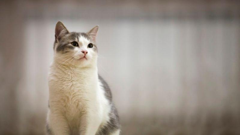 Quítale el mal olor a tu gato sin necesidad de bañarlo con estos 'tips'