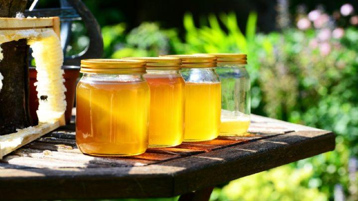 ¿Es mejor la miel que el azúcar? Descubre la verdad detrás de este recurrente mito