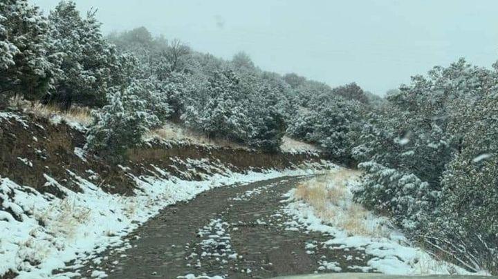 Blanca primavera en Sonora: Sierra de Cananea se cubre de nieve y comparten bellas imágenes