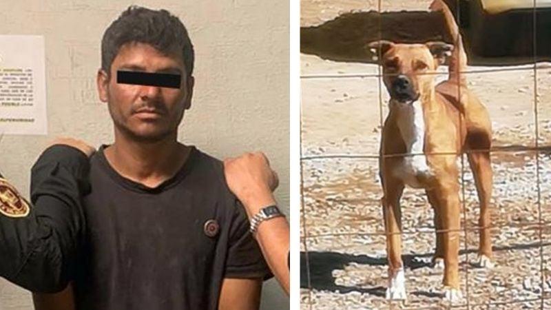 Justicia en Sonora: Cae Carlos Enrique, sujeto que macheteó y prendió fuego al perrito Homero