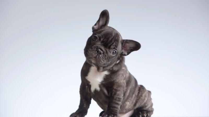 ¿Nueva mascota? Estos nombres de perros inspirados en artistas musicales te gustarán