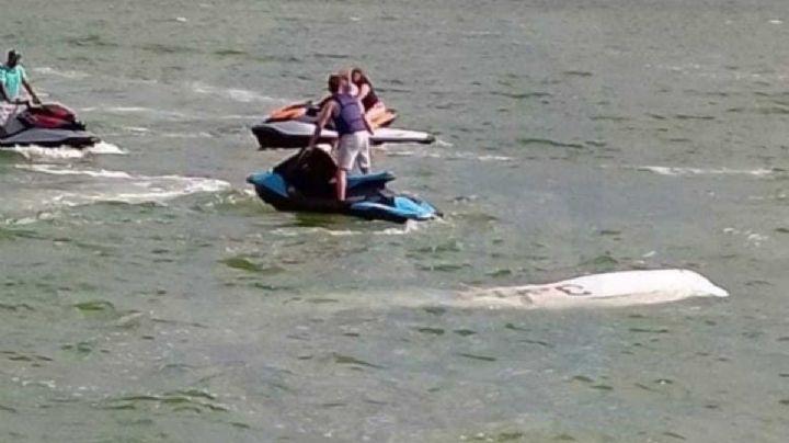VIDEO: Avioneta se desploma en laguna de Cancún; se reportan dos personas muertas