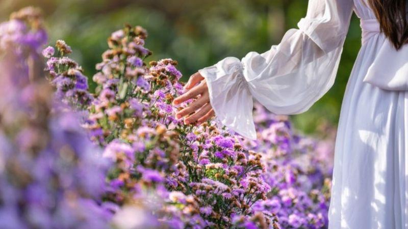 Mejora tu estado de ánimo con estas flores que transmiten emociones positivas