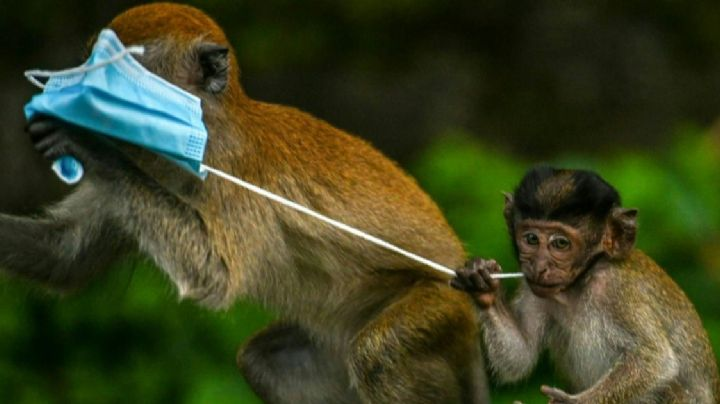 ¡Malas noticias! La pandemia por Covid-19 también ha afectado a cientos de animales
