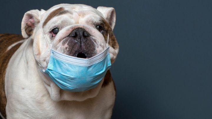 ¡A inmunizar a los perritos! Rusia aprueba la primera vacuna contra Covid-19 para animales