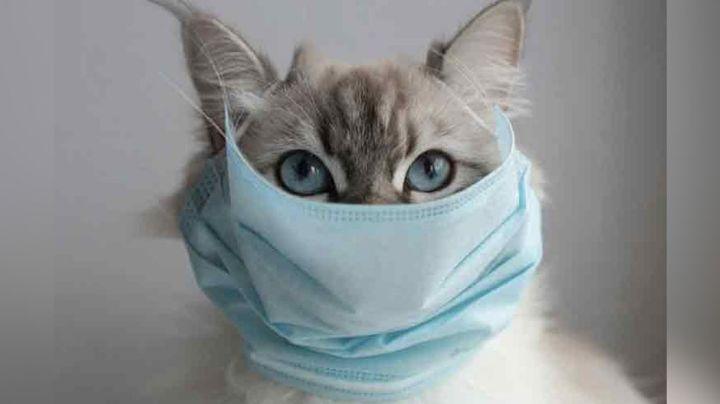 ¡Impresionante hallazgo! Rusia registra la primera vacuna contra el Covid-19 para animales