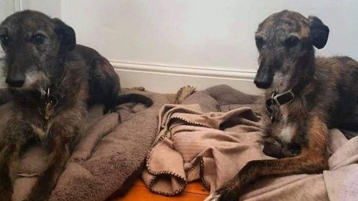 Jack y Herbert se quedan sin hogar tras la muerte de sus dueños durante la cuarentena