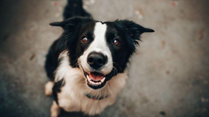 """¡De espanto! Le saca el corazón a su perro y lo utiliza en ritual contra los """"demonios"""" de su hogar"""