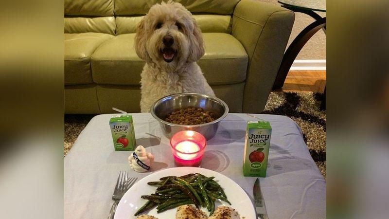 ¿Cita romántica con un perro? Esta locura le pasó a una mujer al usar Tinder