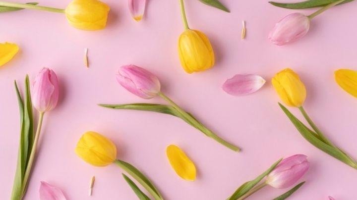 Descubre los significados de las flores por su color y regálalas según sea la ocasión