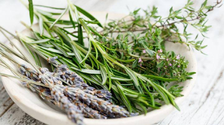 ¡No solo huelen bien! Descubre para qué se usan en realidad las hierbas aromáticas
