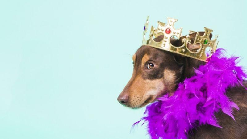 ¡Dignos de la corona! Sorpréndete con estos nombres para perros inspirados en la realeza