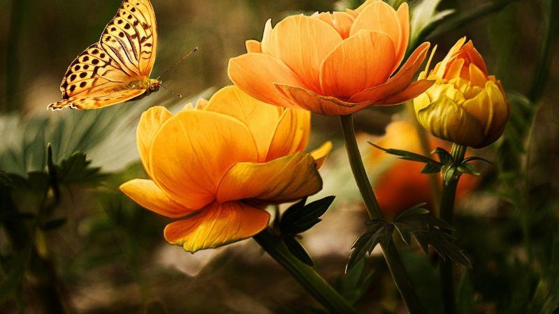 ¡Llena de mariposas tu jardín! Estas flores te ayudarán a lograrlo de forma efectiva