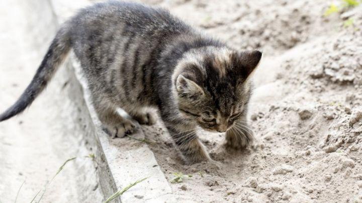 Haz tu buena acción del día y adopta un gato callejero con estos sencillos consejos