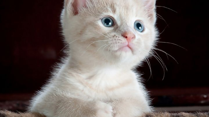 ¿Sospechas que tu gato es sordo? Estas señales te ayudarán a averiguar la verdad