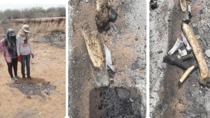 Localizan fosa clandestina con seis cadáveres calcinados en Guaymas; habría una mujer