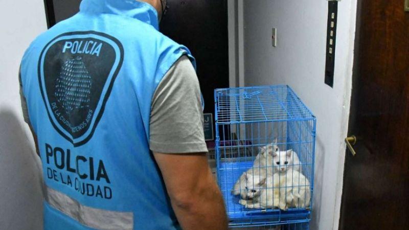 Insólito: Mujer congela los cadáveres de 7 gatos; tenía otros 17 en condiciones deplorables