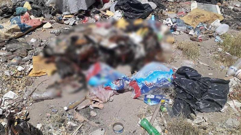 Macabro hallazgo en Hermosillo: Encuentran 20 gallos muertos en terreno baldío