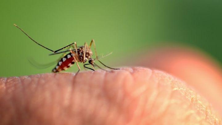 De película: Mosquitos modificados genéticamente serían la solución contra el dengue