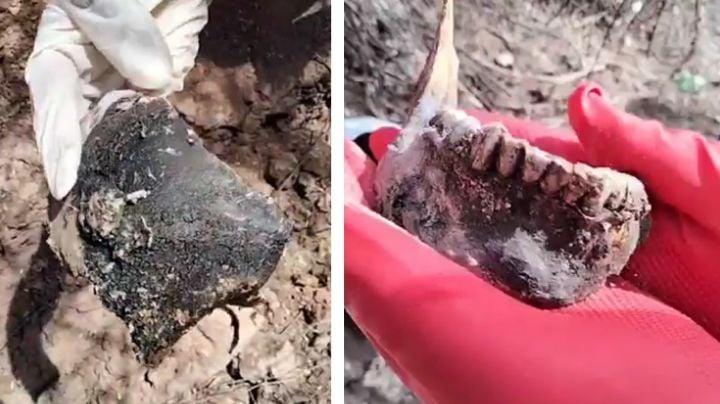 Encuentran cementerio clandestino a las afueras de Guaymas; hay por lo menos dos cadáveres