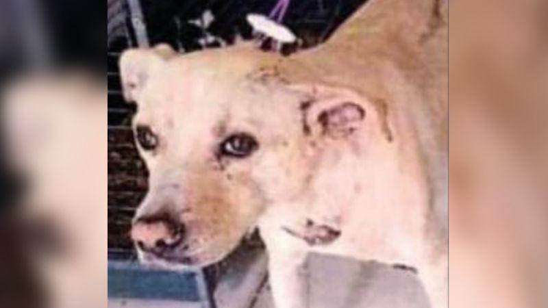Sentencian a menor de edad por apuñalar a perro callejero en calles de Ciudad Obregón