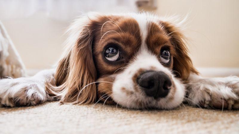 ¿Adoptarás a un perro? Estas son algunas cosas que debes considerar al elegir su nombre