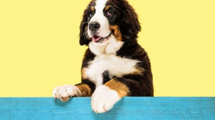 Lleva a tu mascota a las estrellas con estos nombres para perro inspirados en el espacio